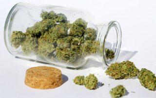 buy high quality Marijuana Seeds