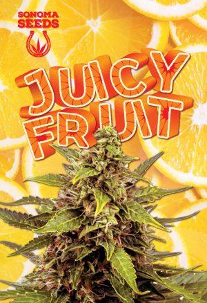 Juicy Fruit strain