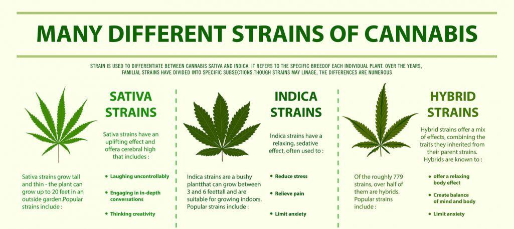 Marijuana-Strains
