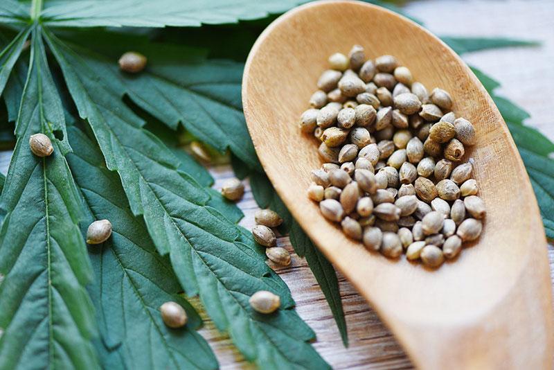 Best Marijuana Seeds for Beginners